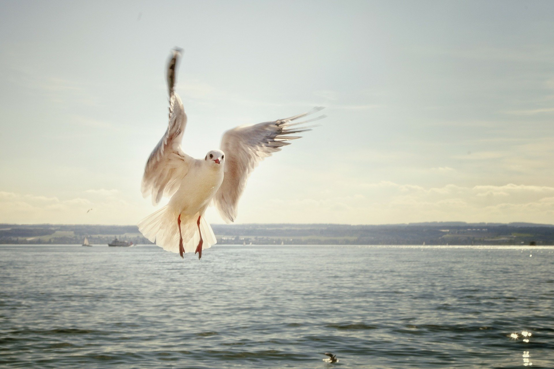 Eyezak asked us about birds. This is a picture of one over water
