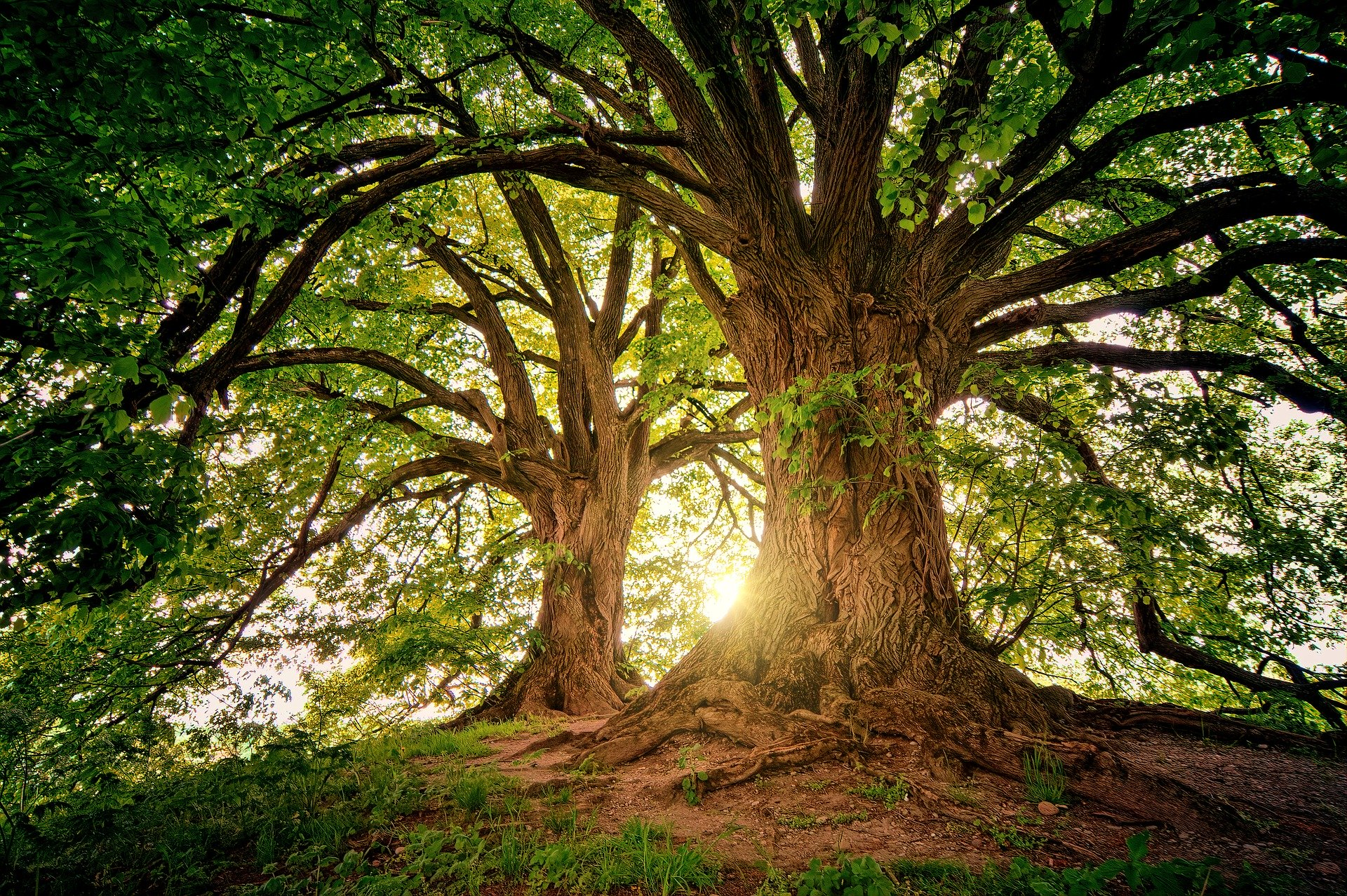 Our Riddle Game asked a question about trees. This is a beautiful picture of two trees in a mystical forest.